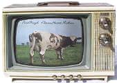 A cow on television.